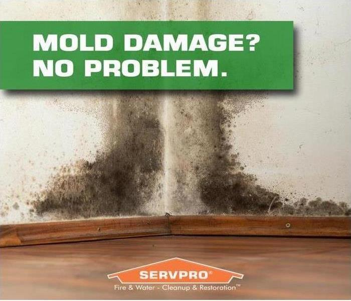 Mold Remediation Follow These Mold Safety Tips If You Suspect Mold
